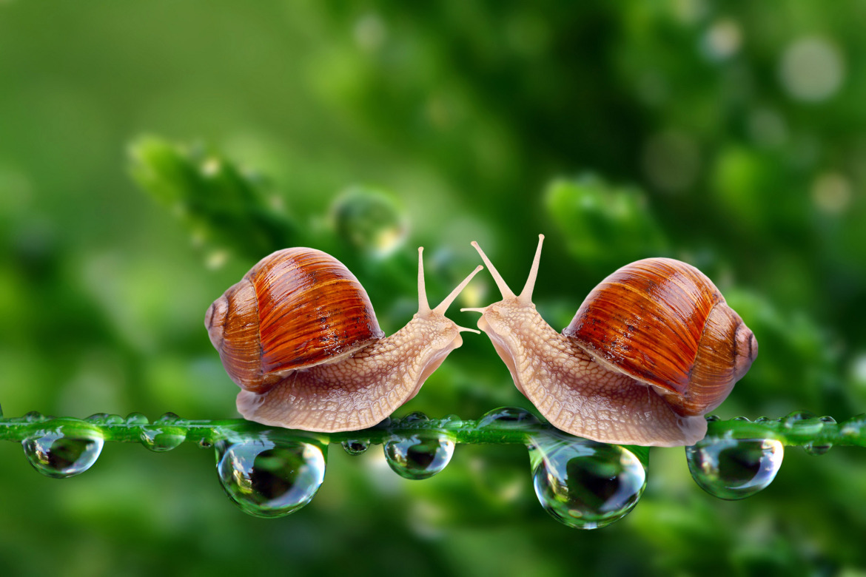 Snail-love